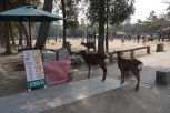The deers are lining up to buy deer crackers! haha